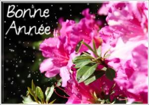 fleurs-bonne-annee-neige